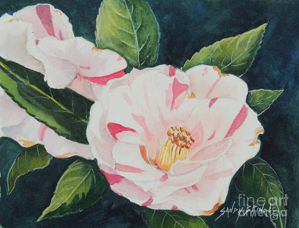 Painting - Camellia ...sold  by Sandy Brindle