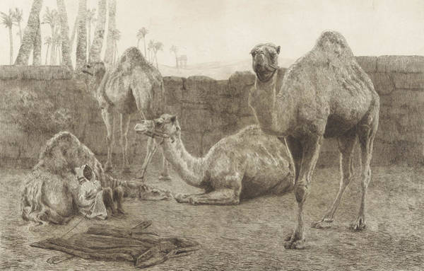 Hoof Drawing - Camels, August Le Gras by August Le Gras