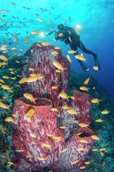 Sponge Photograph - Cameraman Filming Diverse Reef by Scubazoo