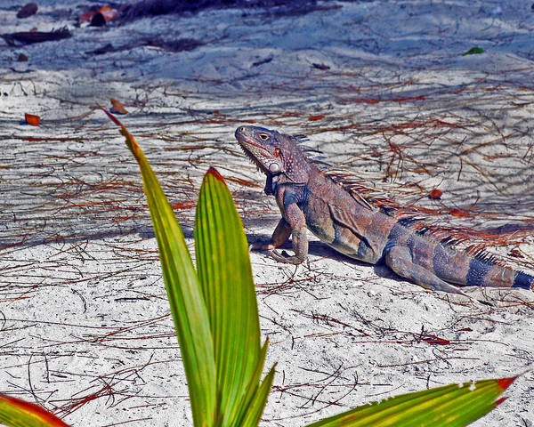 Photograph - Camo Iguana by Bill Swartwout Photography