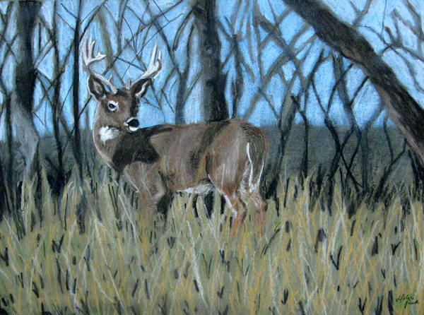 Whitetail Drawing - Camouflage by Hilari Alsip