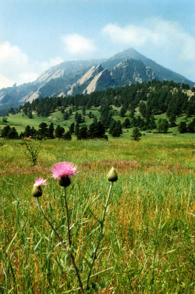 Photograph - Chautauqua Wildflowers Boulder by Marilyn Hunt