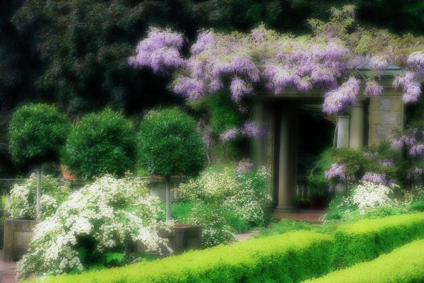 Wisteria Wall Art - Photograph - Canada, British Columbia, Victoria by Jaynes Gallery