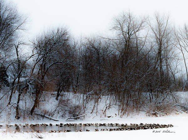 Photograph - Canada Geese Waiting by Edward Peterson