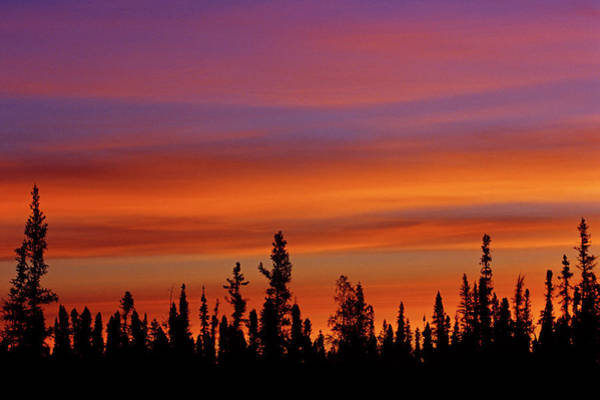 Boreal Forest Photograph - Canada, Northwest Territories, Ft by Jaynes Gallery