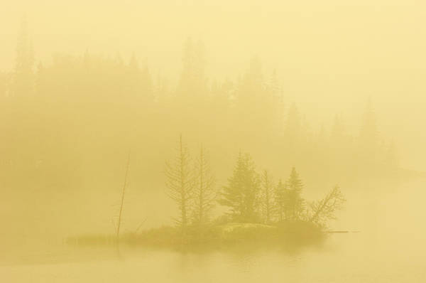 Boreal Forest Photograph - Canada, Ontario Heavy Morning Fog by Jaynes Gallery