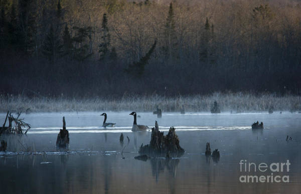 Wall Art - Photograph - Canada Pair by Roger Bailey