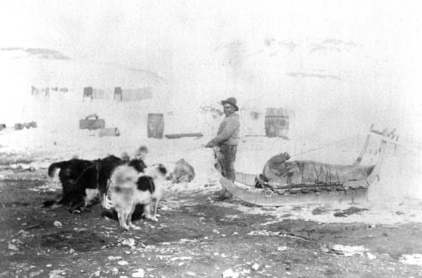 Photograph - Canada Seal Hunt, C1882 by Granger