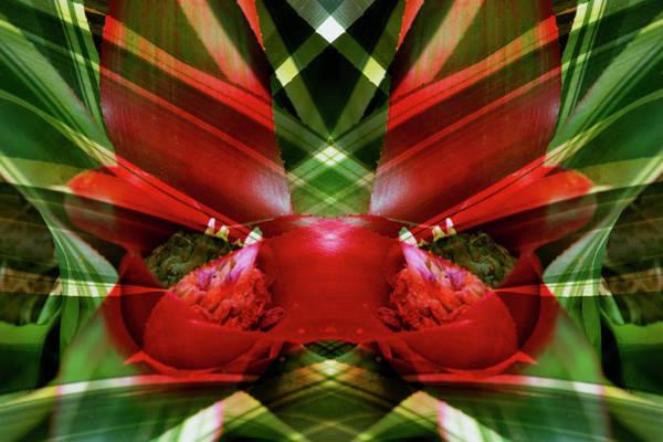 Bromeliad Photograph - Canada, Victoria by Jaynes Gallery