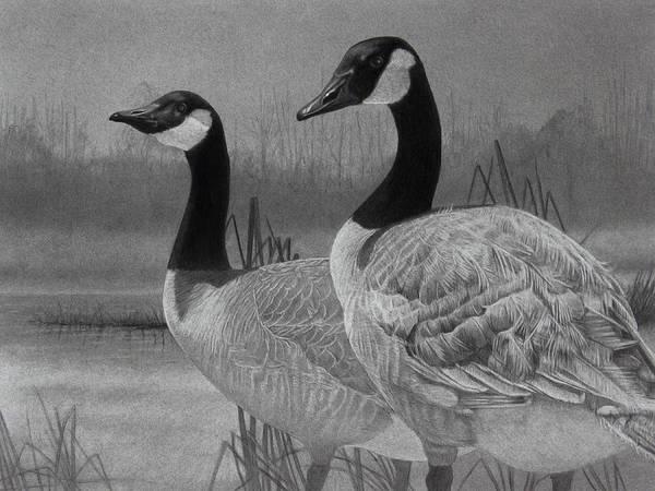 Wall Art - Drawing - Canadian Geese by Tim Dangaran