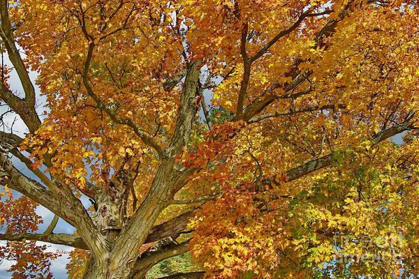 Photograph - Canadian Tree 2012 by Deborah Benoit