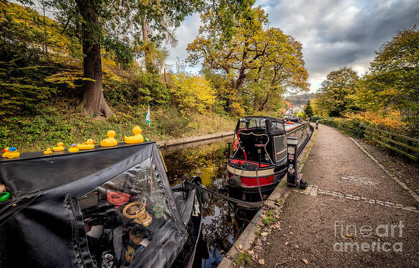 Narrow Boat Wall Art - Photograph - Canal Ducks by Adrian Evans