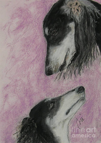 Sight Hound Drawing - Canine Admiration by Cori Solomon