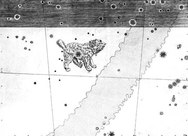 First Star Photograph - Canis Minor Constellation by Royal Astronomical Society/science Photo Library
