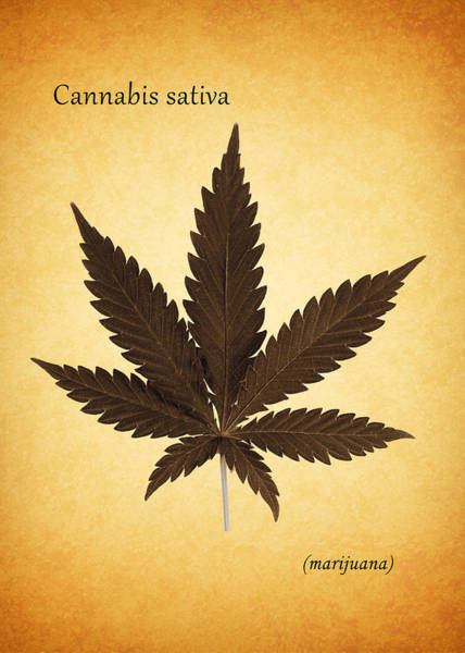 Wall Art - Photograph - Cannabis Sativa by Mark Rogan
