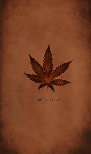 Wall Art - Photograph - Cannabis Sativa Phone Case by Mark Rogan