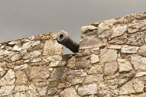 Photograph - Cannon by Kerri Mortenson