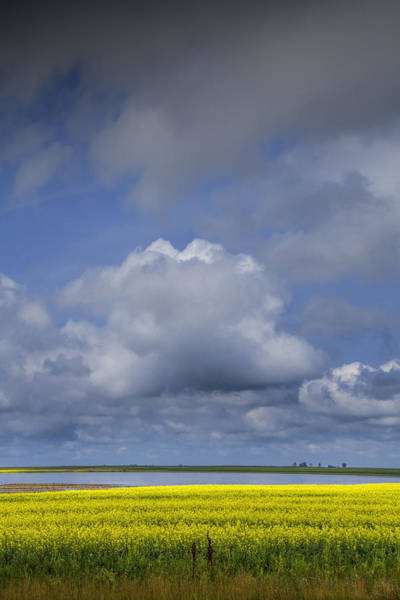 Photograph - Canola Field And Lake Under Clouds by Randall Nyhof