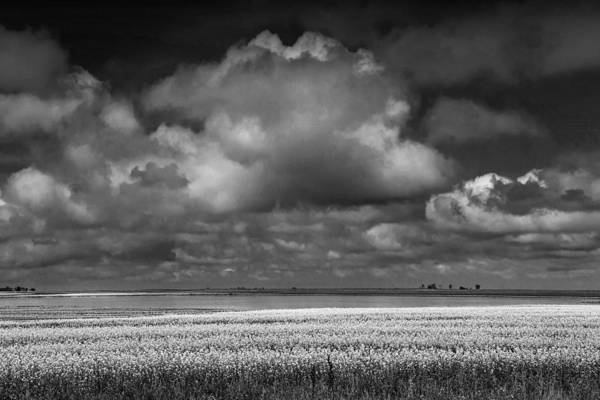 Photograph - Canola Field In Black And White With Billowing Clouds by Randall Nyhof