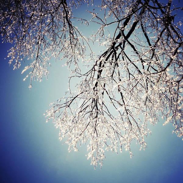 Photograph - Canopy Of Ice by Natasha Marco