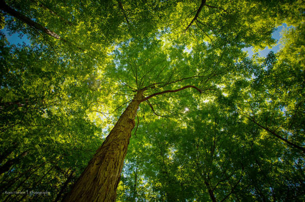 Photograph - Canopy by Ross Henton