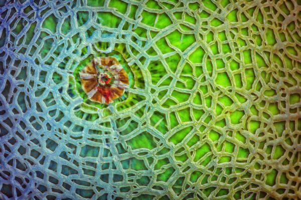 Cucurbitaceae Photograph - Cantaloupe Street Map by Nikolyn McDonald