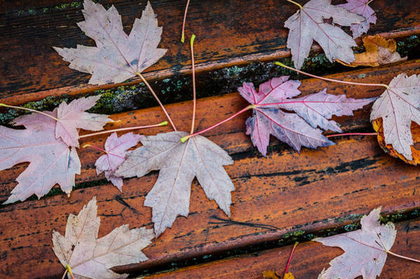 Photograph - Canvas Of Leaves by Roxy Hurtubise