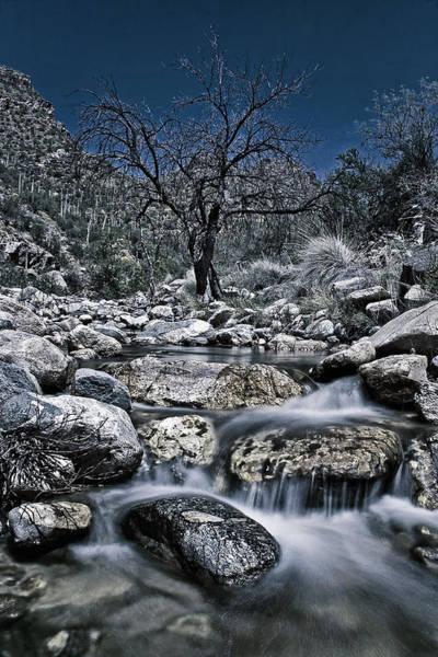 Photograph - Canyon Creek by Leda Robertson