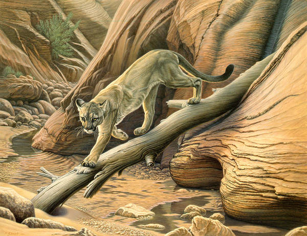 Lions Painting - Canyon Hunter -  Cougar by Paul Krapf