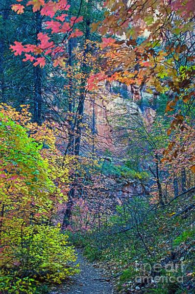 Oak Creek Canyon Painting - Canyon Trail by Brian Lambert
