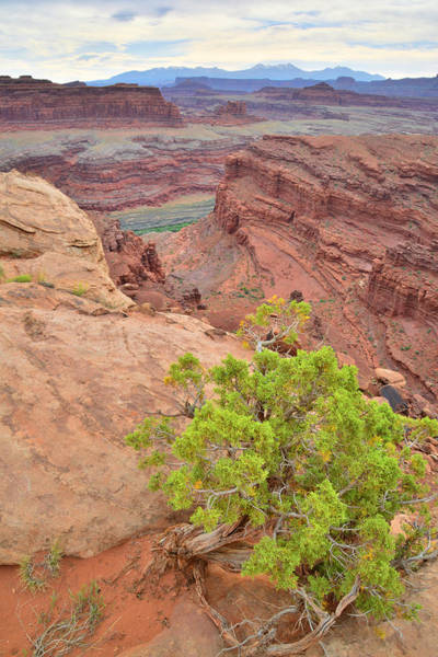 Photograph - Canyon's Edge by Ray Mathis