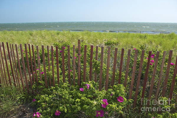 Photograph - Cape Beach Fence by Amazing Jules