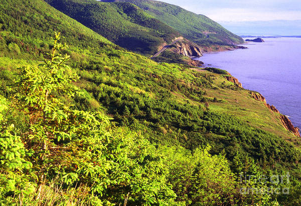 Photograph - Cape Breton Highlands National Park by Thomas R Fletcher