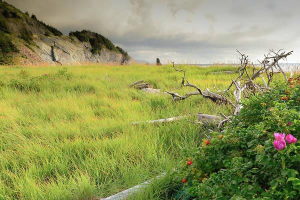 Wall Art - Photograph - Cape Bretons Summer Beauty by Mel Sweetnam