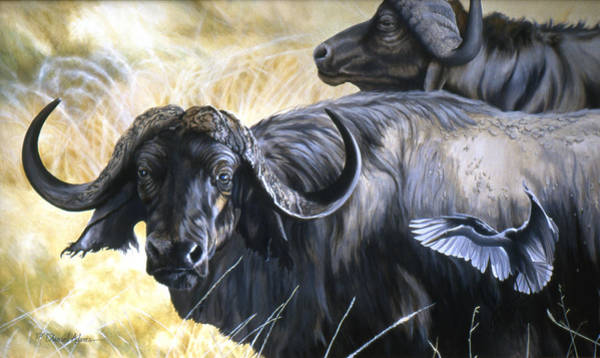 Painting -  Da206 Cape Buffalo By Daniel Adams by Daniel Adams