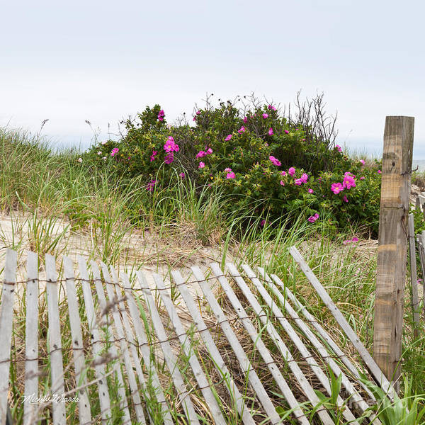 Cape Cod Beach Roses Art Print