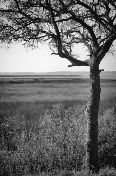 Photograph - Cape Fear River View From Fort Fisher Nc by Willard Killough III