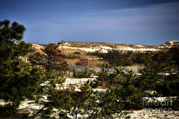Photograph - Cape Henlopen State Park  Usa by Gerlinde Keating - Galleria GK Keating Associates Inc