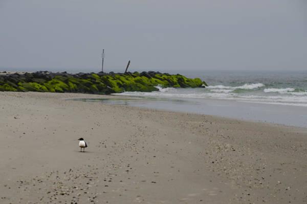 Jetti Wall Art - Photograph - Cape May Beach by Bill Cannon