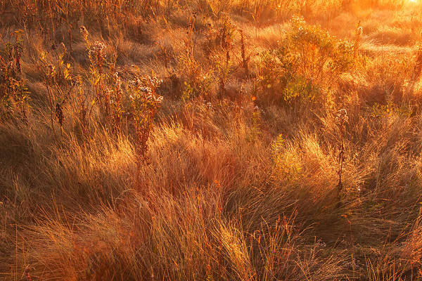 Photograph - Cape May Meadow Grass by Tom Singleton