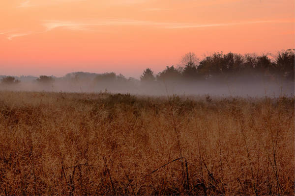 Photograph - Cape May Meadow by Tom Singleton