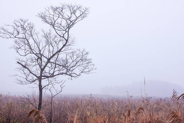Photograph - Cape May Meadows by Tom Singleton