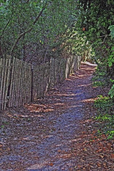 Photograph - Cape May Point Beachpath by Tom Singleton