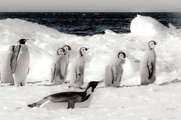 Molting Wall Art - Photograph - Cape Washington, Antarctica by Janet Muir