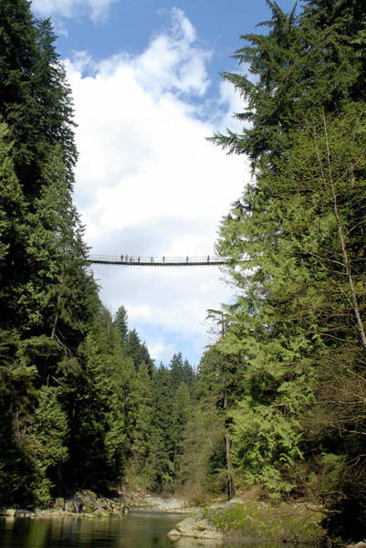 Wall Art - Photograph - Capilano Suspension Bridge, North by Rich Wheater