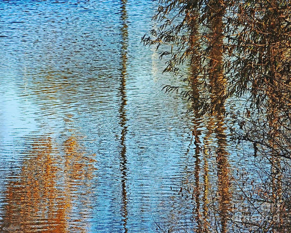 Photograph - Capitol Lake Waters by Lizi Beard-Ward