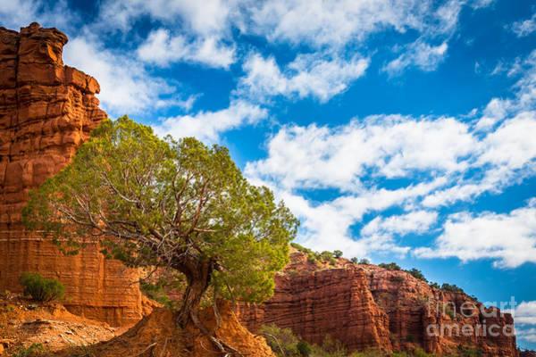 North Rim Photograph - Caprock Canyon Tree by Inge Johnsson