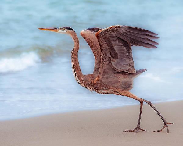 Photograph - Captiva Heron by Robert FERD Frank