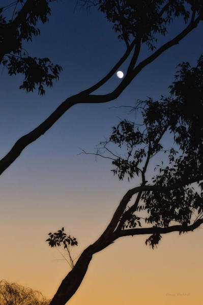 Wall Art - Photograph - Capture The Moon by Donna Blackhall