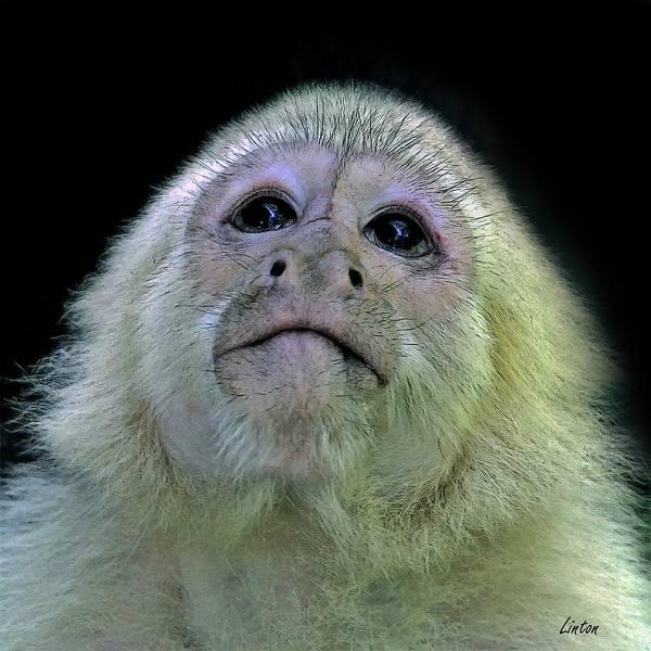 Digital Art - Capuchin Closeup by Larry Linton